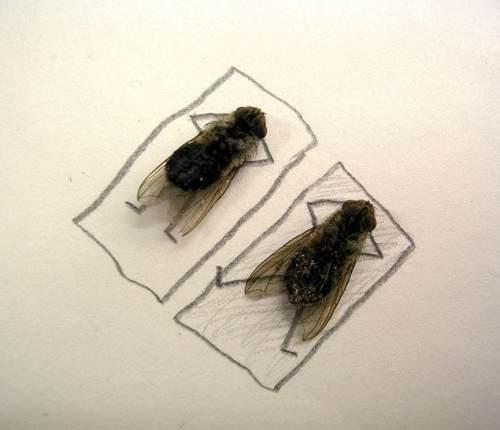 dead-fliesc