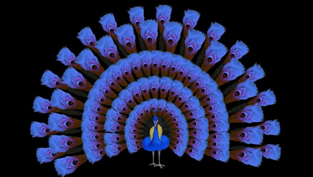 peacock_ch4b